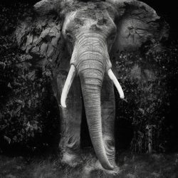 The Disappearance of the Elephant - Erik Brede Photography