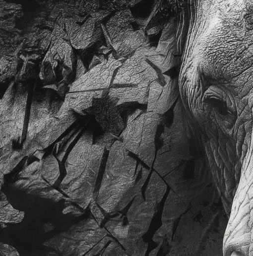 The Disappearance of the Elephant - Closeup