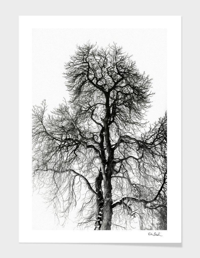Erik Brede Photography - Naked Tree Part 2