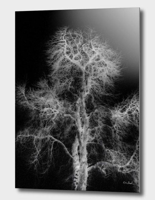 Erik Brede Photography - Naked Tree Part 1