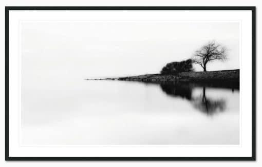 lonely tree framed - Erik Brede